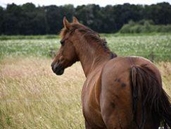 paardenontmoeting11