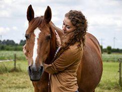 paardenontmoeting15