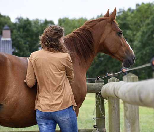 paardenontmoeting4