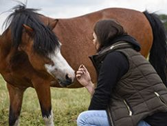 paardenontmoeting24